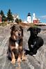 Elliot & Ollie, Pemaquid Point, Maine 10-2004