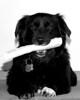 Ollie's got a bone to pick 2006