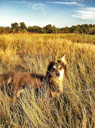 Elliot @ Marymoor dog park in Redmond