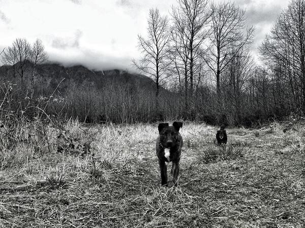 Karly & Ollie exploring Meadowbrook Farm