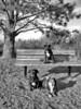 Double-Decker Dogs @ Marymoor, WA 8-2012