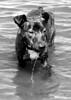 Karly in Lake Washington 3-2006