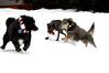 'tis the season to chase Ollie...<br /> Snoqualmie Pass, WA 2005