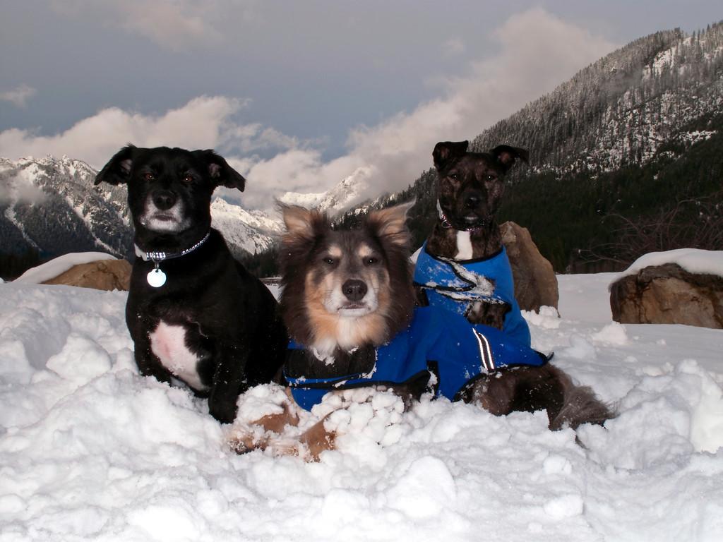 Snow Day 11-2009