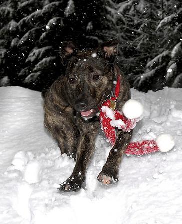 Karly, snow-spaz<br /> Snoqualmie Pass, WA
