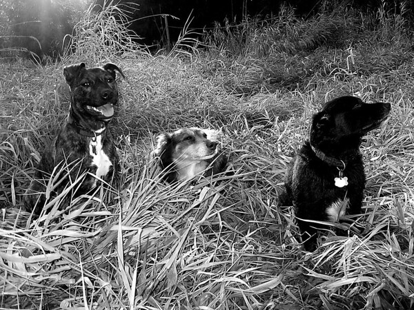 Splendor in the Grass with Karly, Elliot & Ollie