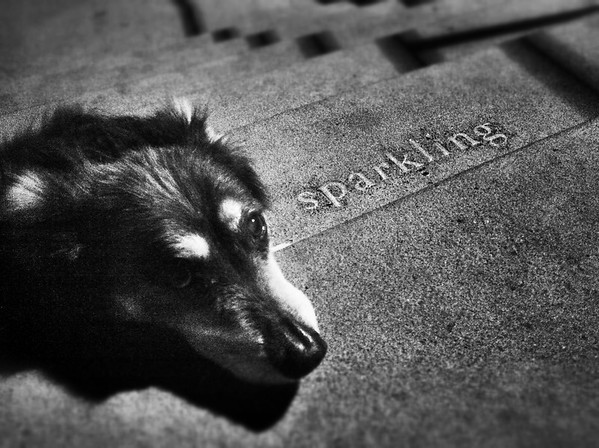 Elliot, sparkling on the steps @ Snoqualmie Falls Park