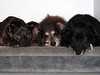 Step-Pups