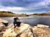 Ollie @ Missouri Headwaters State Park, Montana 2014