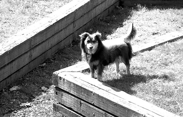 Elliot in Luther Burbank amphitheatre<br /> Mercer Island, WA
