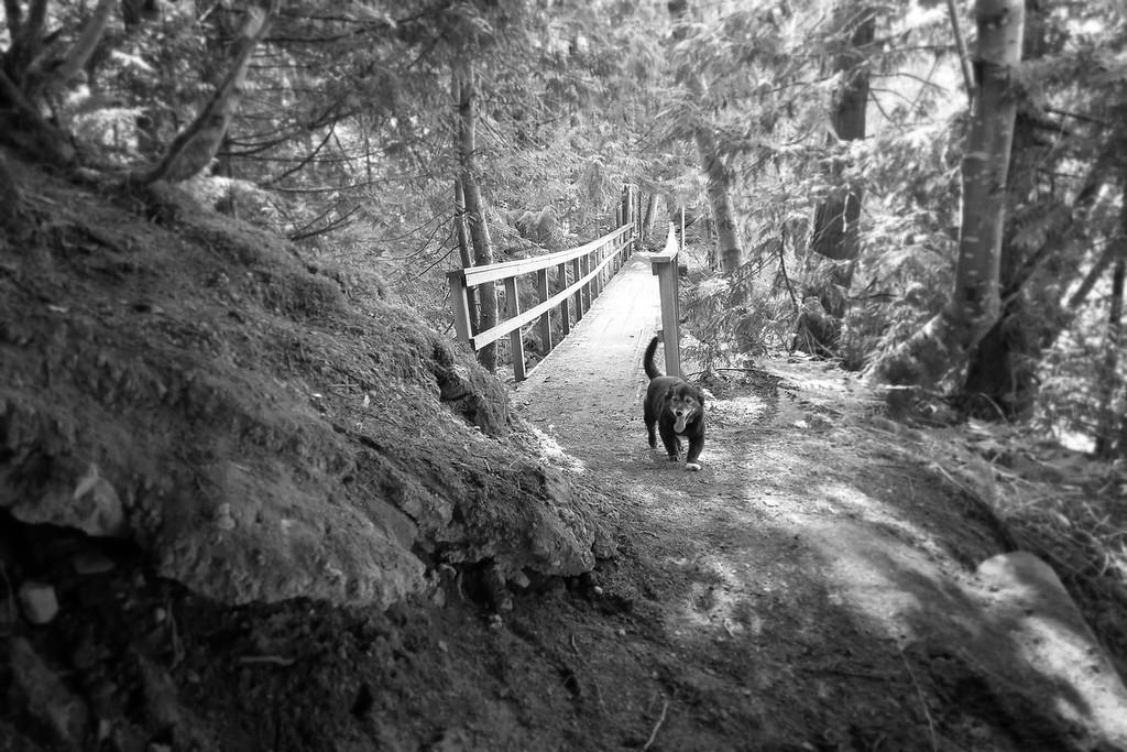 Ollie on Asahel Curtis Trail 2015