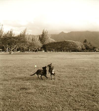 Play Ball! - Hale' & Elliot - Hawaii 4-2000