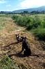 Poi Dogs Pondering - Hale'iwa, HI - 1/2000