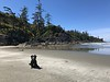 Ollie on Vancouver Island - 7/2017