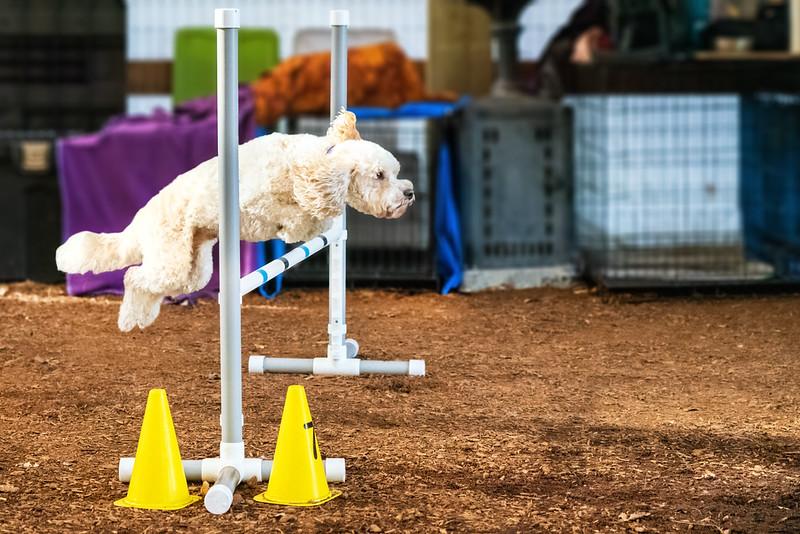 agility class @ Kinship Dog Training