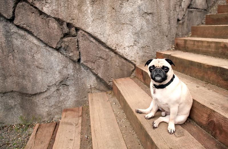 Talus Dogs calendar