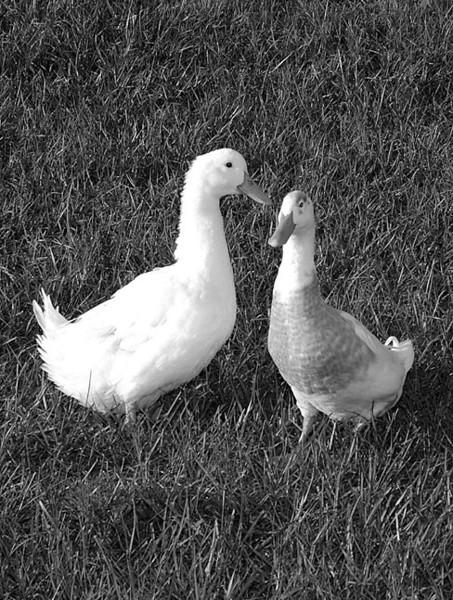 Chandler & Ducky Doo