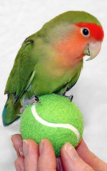 Flirty Bird