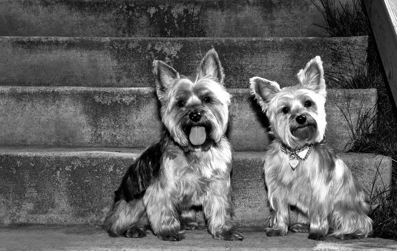 Talus calendar 0340 bw - Buster & Olly