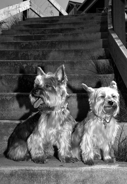 Talus calendar 0334 bw - Buster & Olly