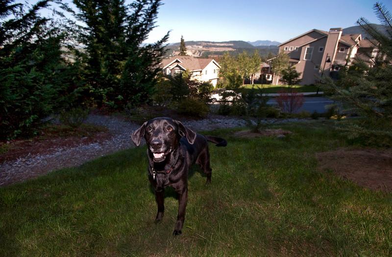 2010 Talus calendar - 3720<br /> Mabel