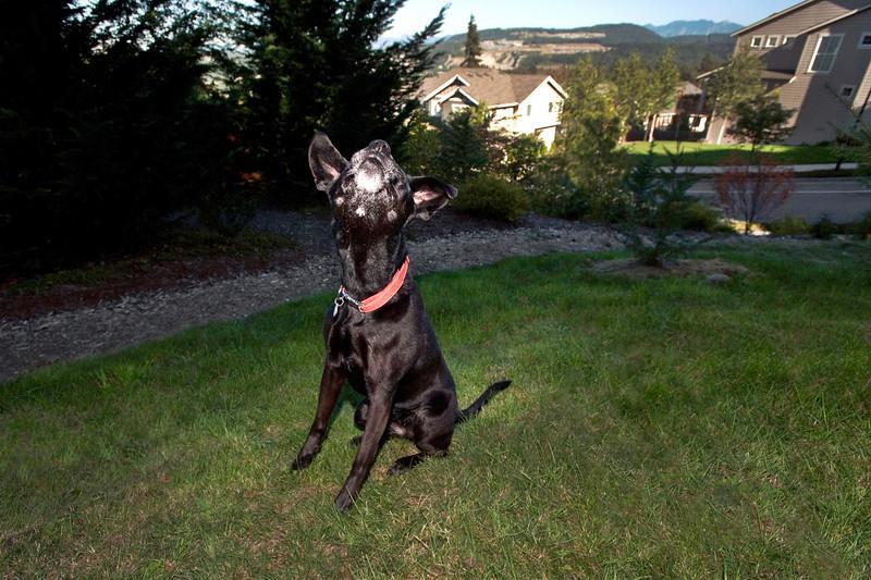 2010 Talus calendar - 3712<br /> Mabel