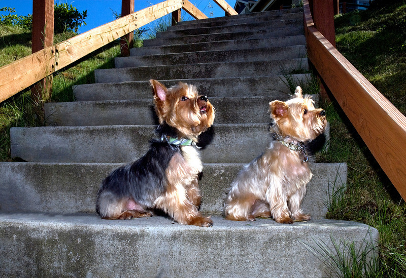 Talus calendar 0332 - Buster & Olly