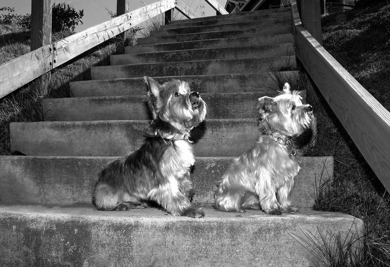 Talus calendar 0332 bw - Buster & Olly