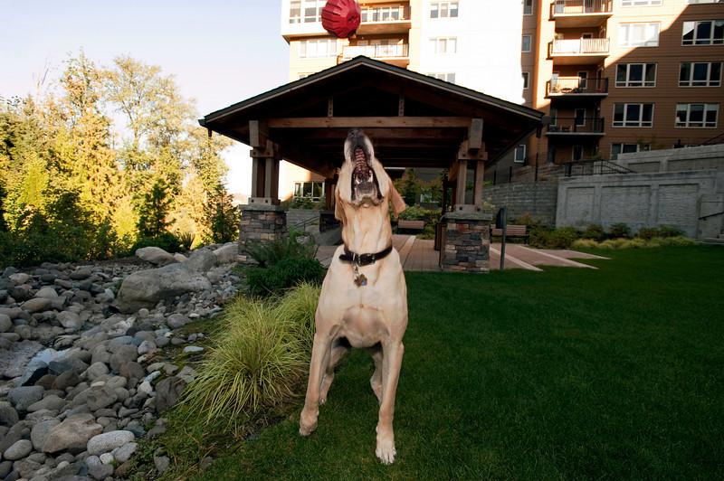 2010 Talus calendar - 3778<br /> Hank