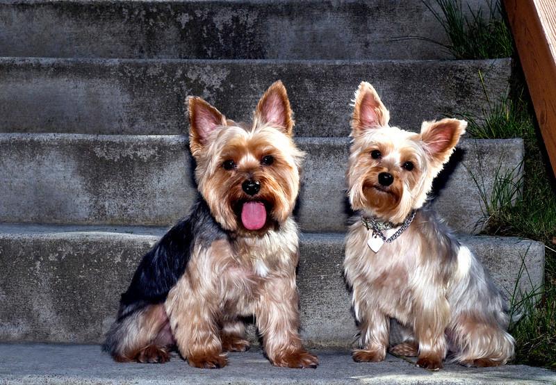 Talus calendar 0341 - Buster & Olly