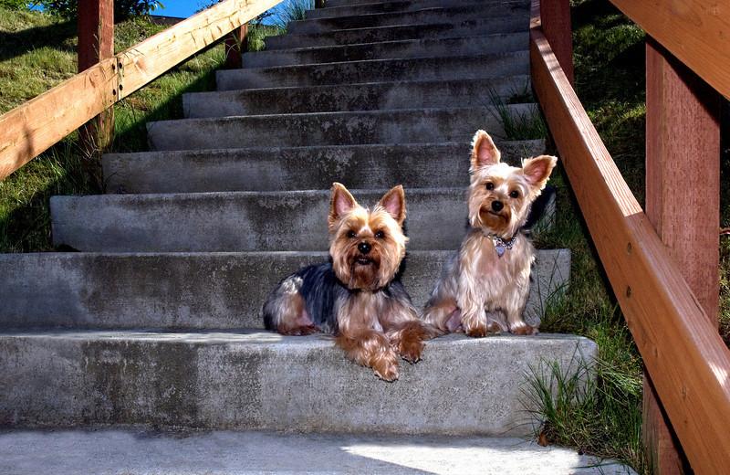 Talus calendar 0337 - Buster & Olly