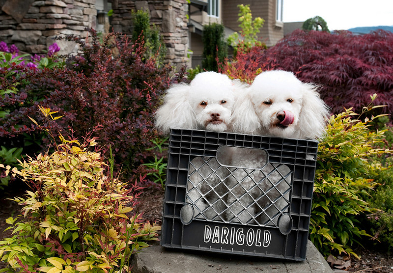 2010 Talus calendar - 1609<br /> Fifi & Jacques
