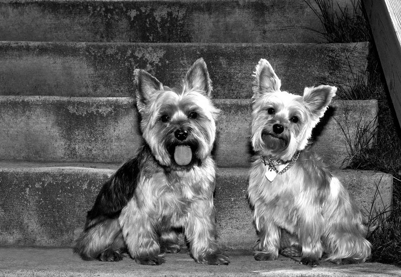 Talus calendar 0341 bw - Buster & Olly