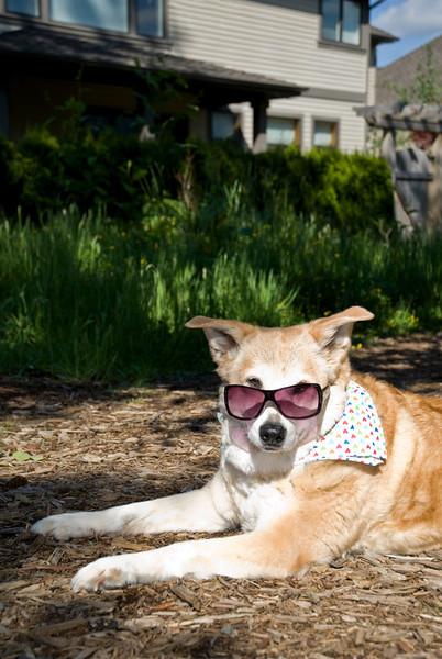 glamorous Goldie<br /> Talus calendar 0322