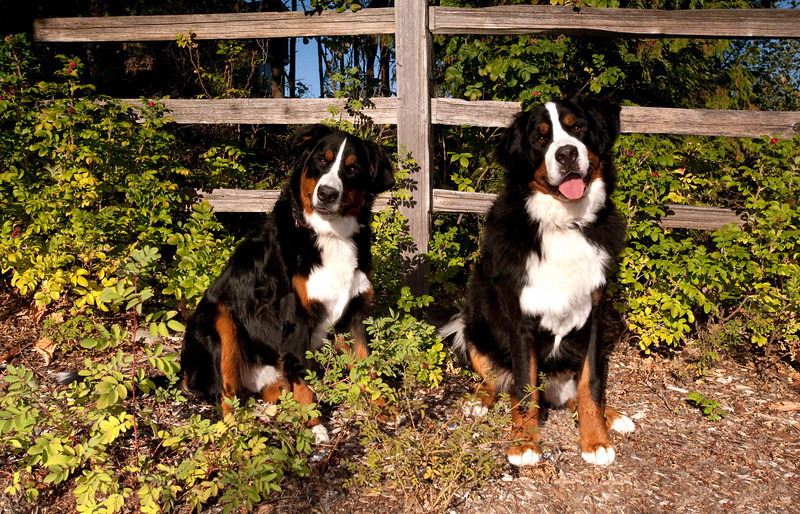2010 Talus calendar - 3780<br /> Anya & Jack