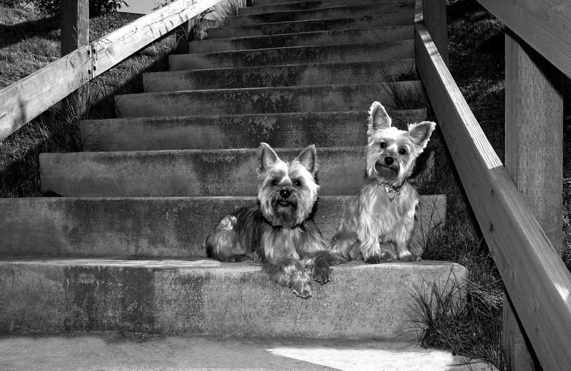 Talus calendar 0337 bw - Buster & Olly