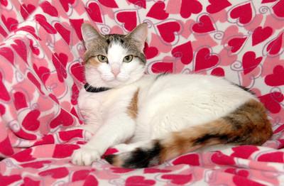 Chloe, Queen of Hearts