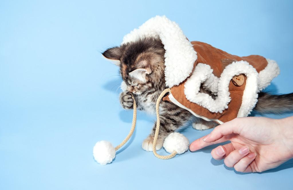 kitten KDS_9233