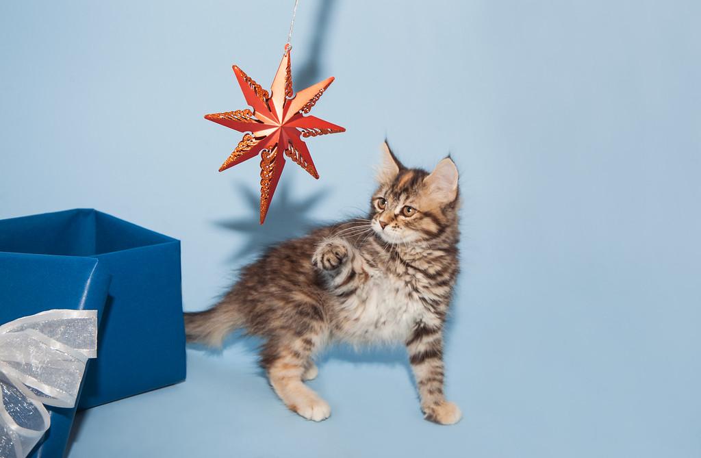 kitten KDS_9225