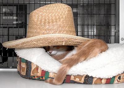 Ivan's sombrero siesta