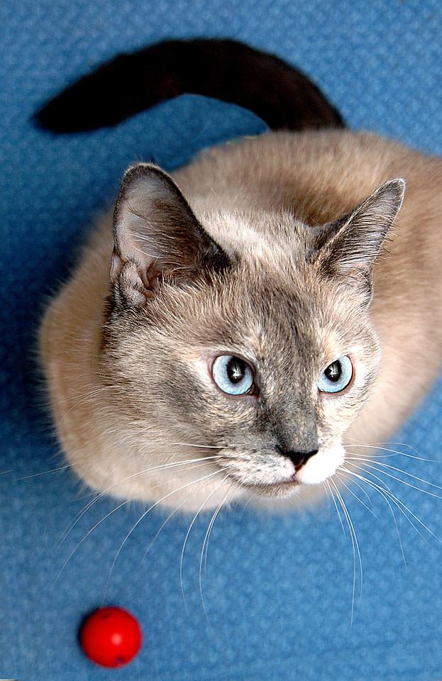 Kirin, portrait in blue