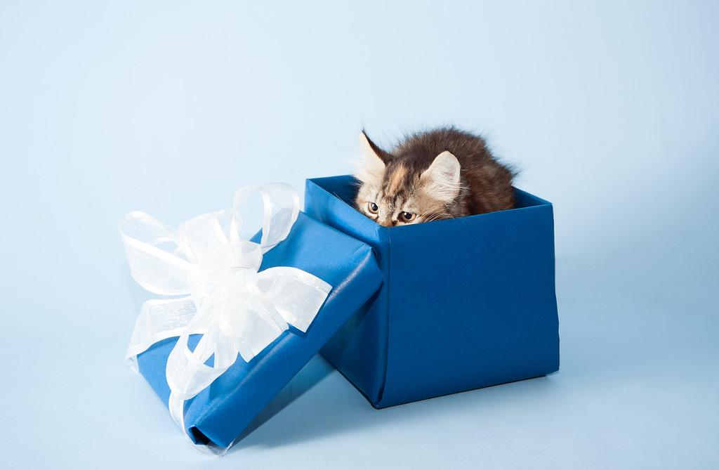 kitten KDS_9166