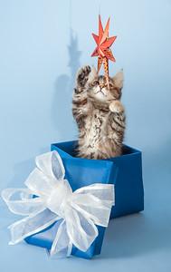 kitten KDS_9180