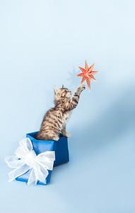 kitten KDS_9220