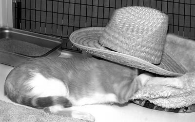 Ivan taking a siesta