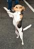 """I spy a boy! I can't contain my joy!""<br /> Cool Canines & Fabulous Felines Adoption Fair - 9/26/2010"