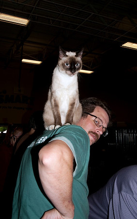 cat finds a volunteer with a view-Woodinville, WA 8-1-2010