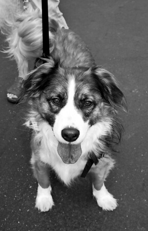 furever friend, bw - Woodinville Wags & Whiskers adoption fair 8-1-2010
