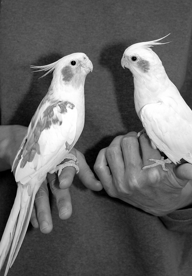 Chipster & Mac - 2 birds in the hands are worth 3 in the bush...