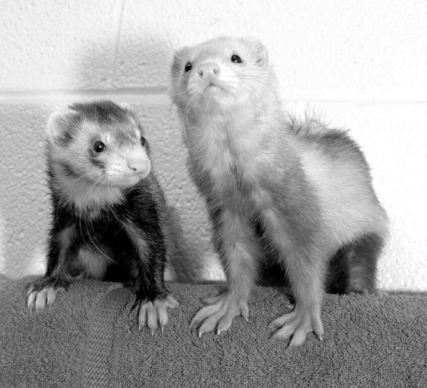 Oscar & Felix, the odd couple